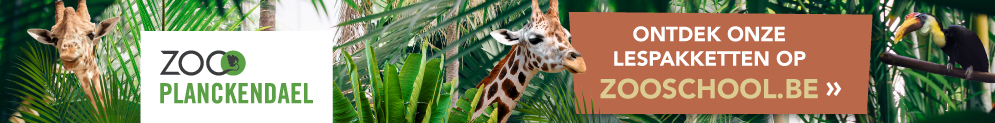 Op zooschool.be vind je filmpjes, foto's, … Gloednieuw zijn de lespakketten, helemaal gratis te downloaden.