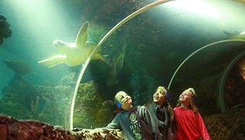 bezoekers aan Sea Life