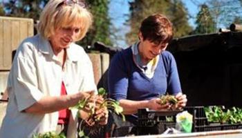 twee vrouwen planten kruiden