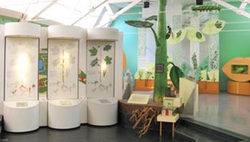 tentoonstelling plantensoorten