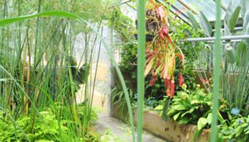 Tropische planten in serre