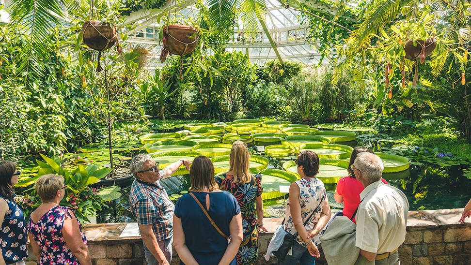 Mensen brengen bezoek aan plantentuin Meise