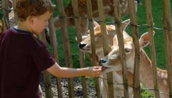 Jongen geeft hert te eten