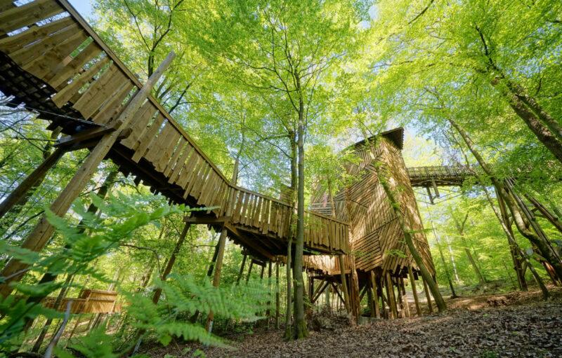 houten loopbrug tussen de bomen