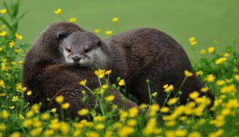 Otters in dierenpark De Zonnegloed