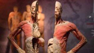 foto van geplasificeerd menselijk lichaam