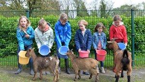 kinderen voederen geitjes in de kinderboerderij