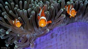 vissen tussen het koraal