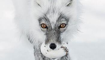 foto van een wild dier