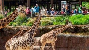 giraffen in GaiaZOO