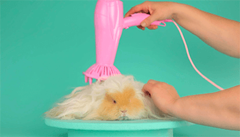 Animal getting a hair brushing