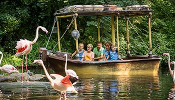 gezin kijkt naar flamingo's in een attractie in bellewaerde