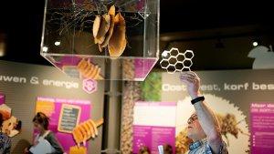 Gids Ludo in het bijenteeltmuseum