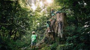 Spelend leren in basisschool Kosmos: kleuters spelen met een touw in een boom