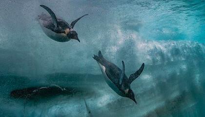 pinguïns onder water