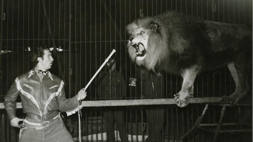 leeuwentemmer in het circus