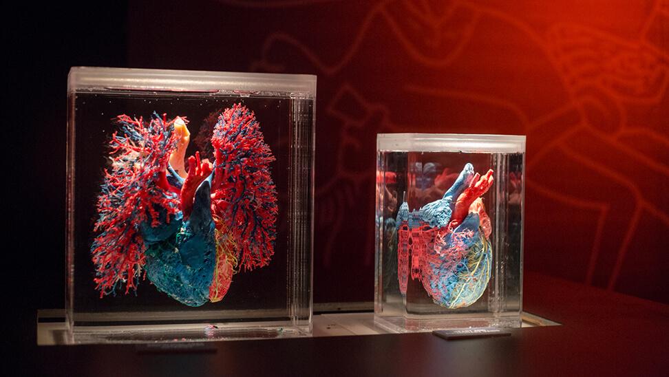 Een hart in de expo 'real bodies'