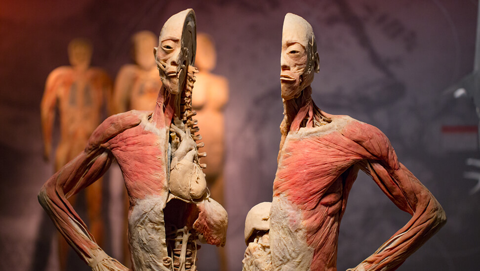 anatomische voorstelling van een menselijk lichaam in het echt