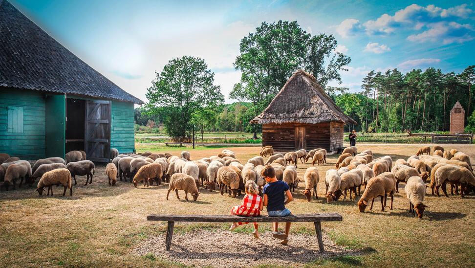 2 kindjes op een bank tussen de schapenin bokrijk