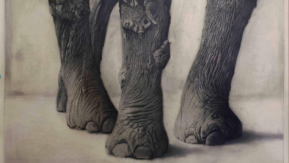 olifantenpoten of bomen?